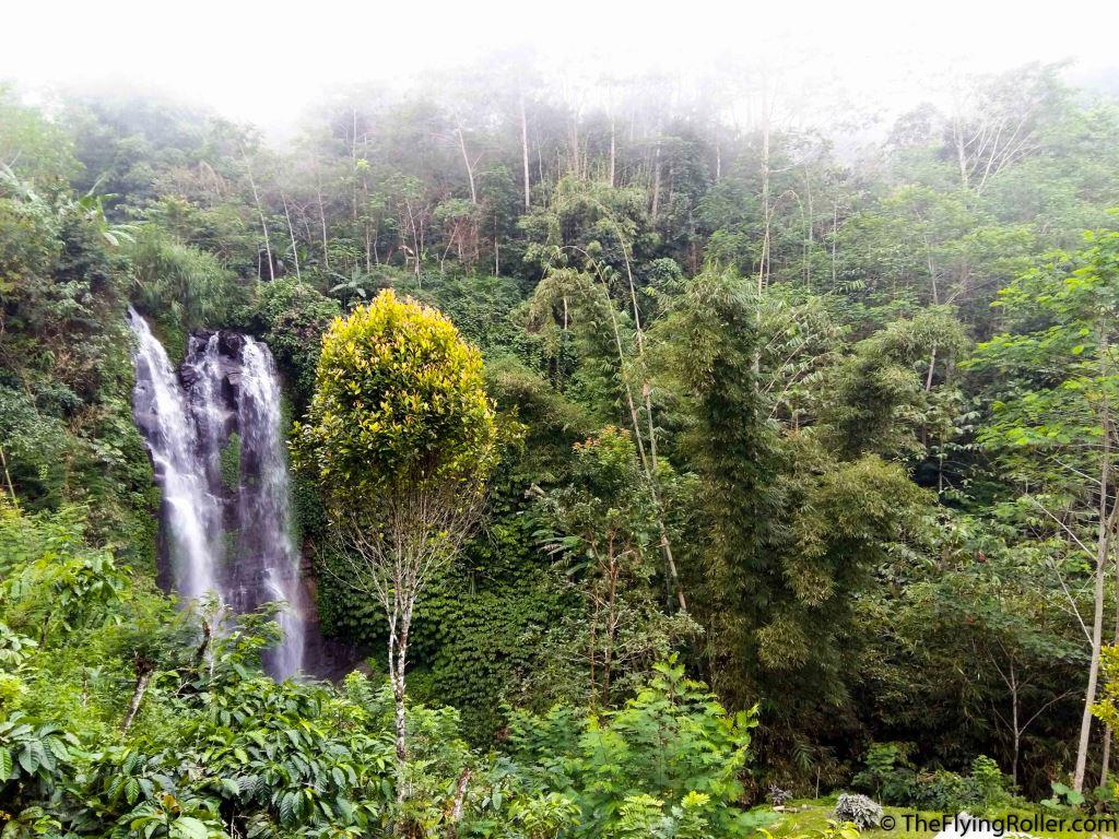 A waterfall in a lush green forest